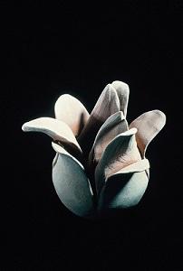 Bloom wb